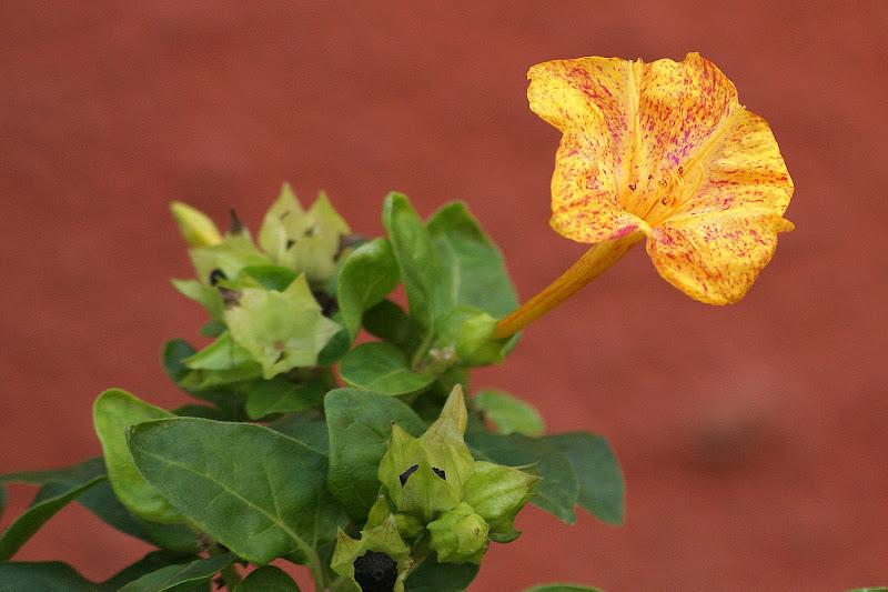 Cores das flores laranja