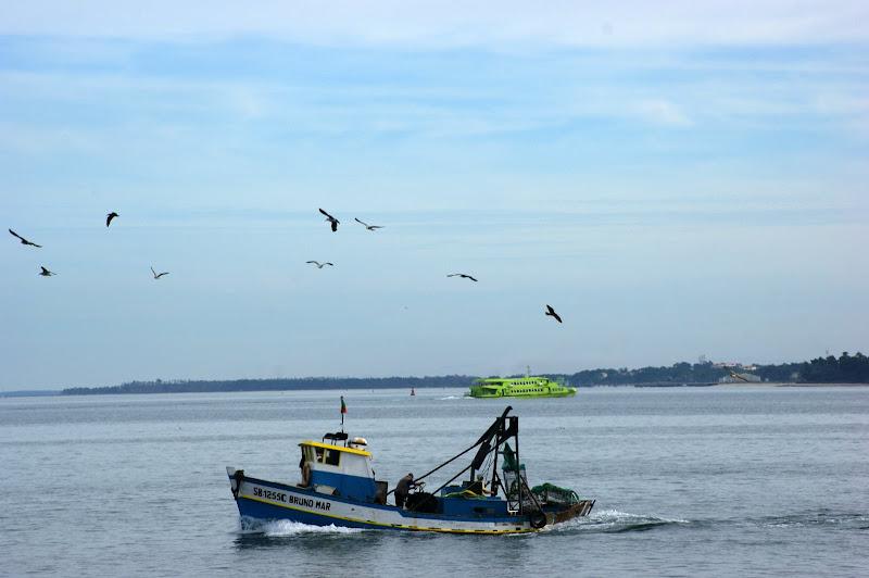 O barco e o Sado..gaivotas
