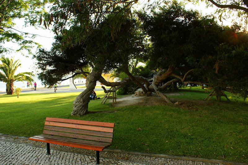 Jardim da Beira mar, a árvore