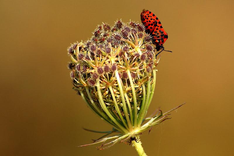 A aranha e o escaravelho