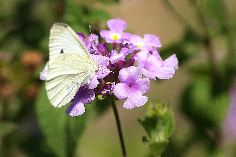 Flor na borboleta