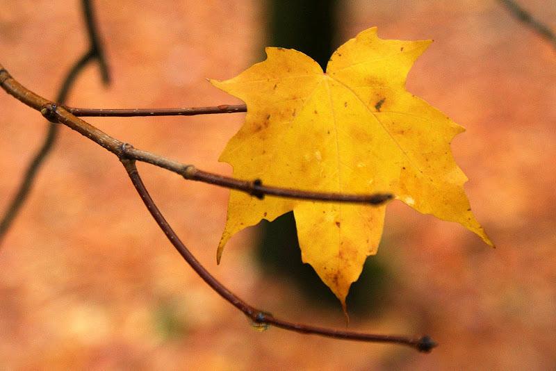 Folhas do Outono