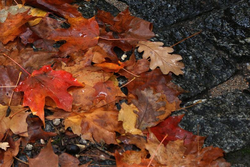 Outono a cores, folhas do Gerês