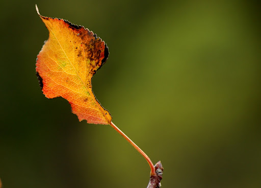 Outono.. em folha