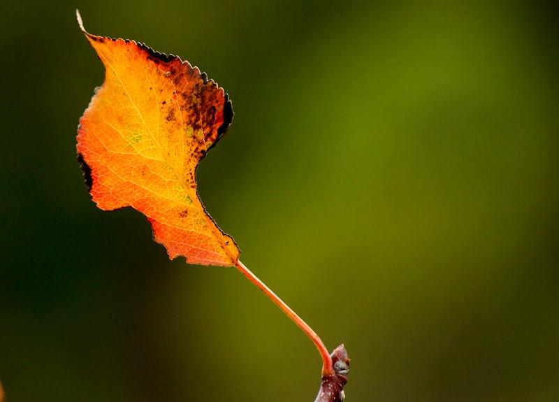 Outono, folha