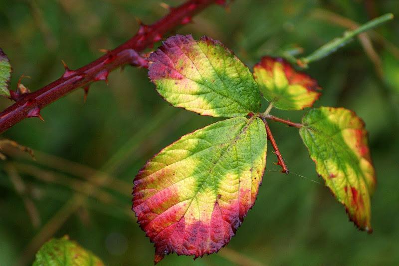 Cores do Outono, Gerês