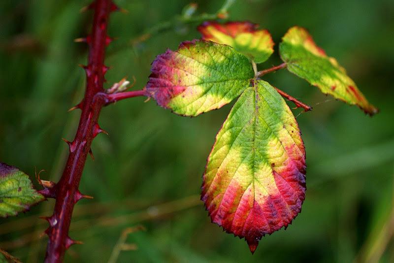 Folhas de Silva, Outono no Gerês