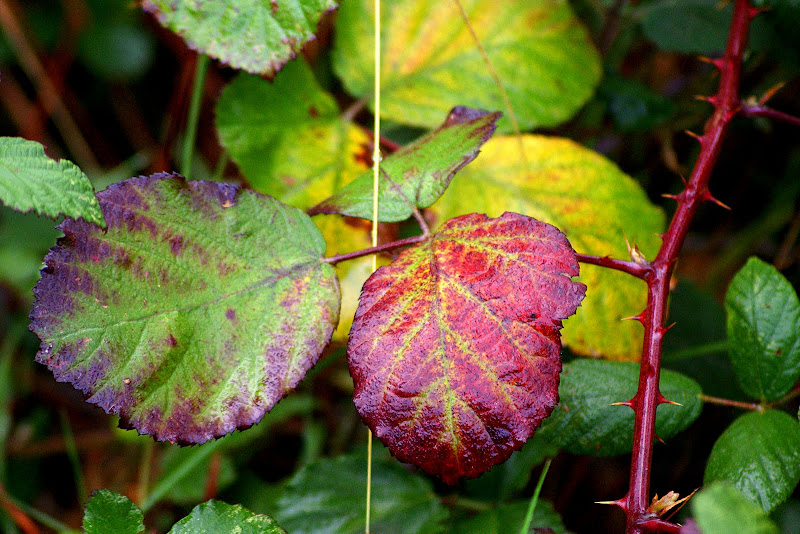 Detalhes do Outono, Folhas de silva