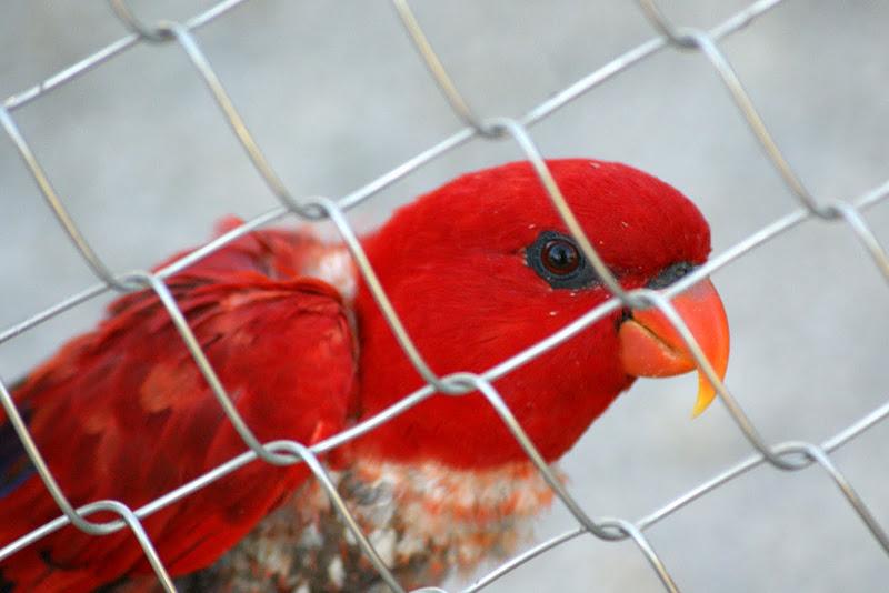Aves, Zoo de Lisboa