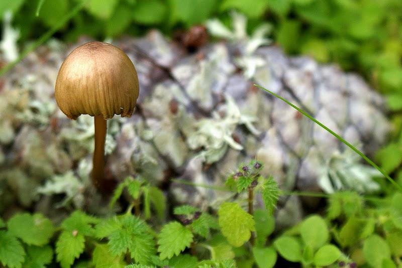 O pequeno cogumelo