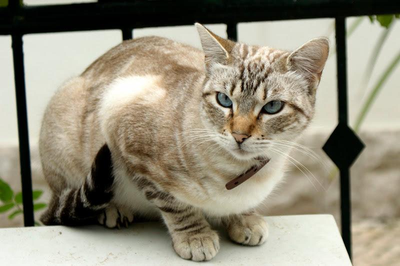 O gato em Setúbal