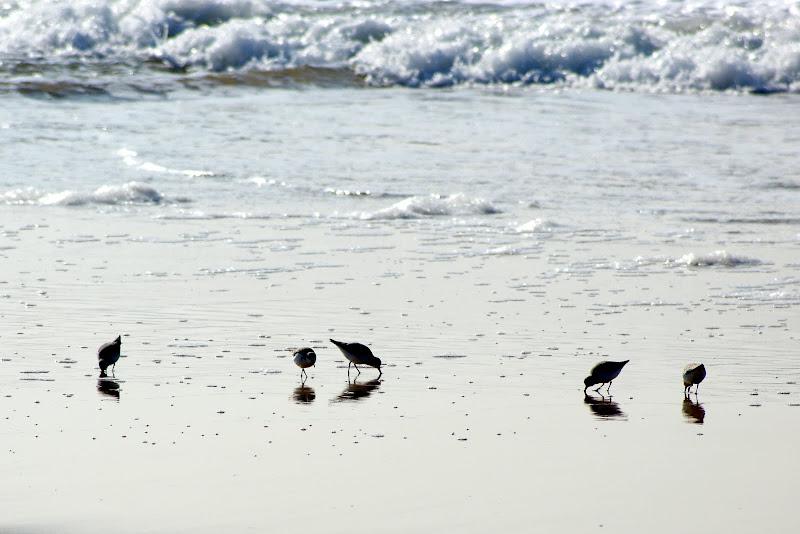 Aves, Costa da Caparica