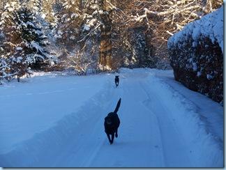 6th January snow 030