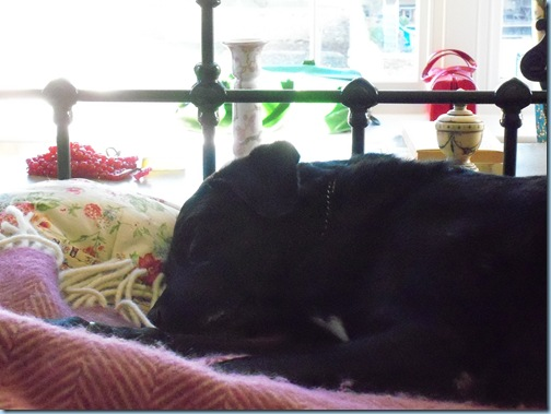 view from sickbed with dogs 008