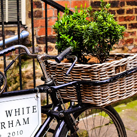Flat White Durham by Karen Ross - Transportation Bicycles
