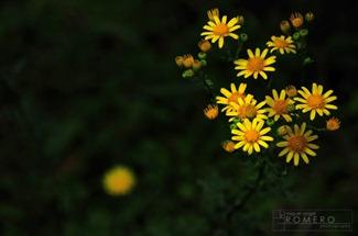 FloresAmarillas