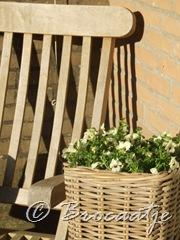 tuin maart 2010 004