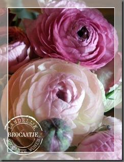 bloemen 013