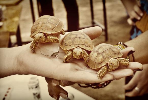 tea and turtles014