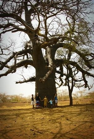 tree2_resize