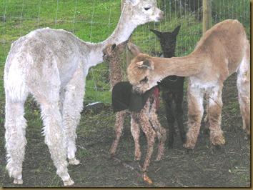 Rose og hennes datter Paris hilser på Bandit