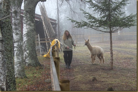 Alpakka: Grimetrening med NC Texas Energizer