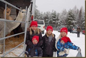 Marked på Persmoen med noen av alpakkaenes besøkende