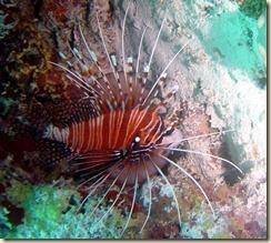29-underwater