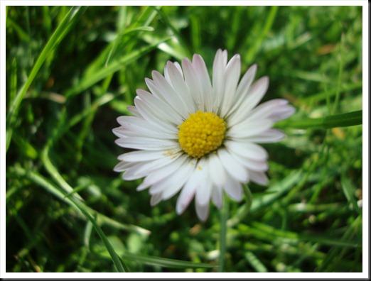 bloom (19)