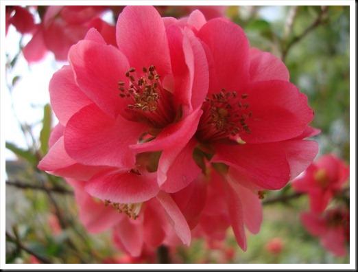 bloom (11)