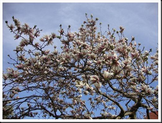 bloom (12)
