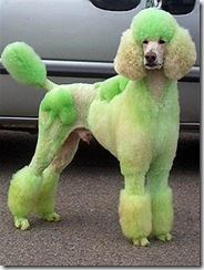 Poodle-St.Pats (Small)