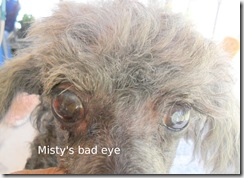 Misty's bad eye