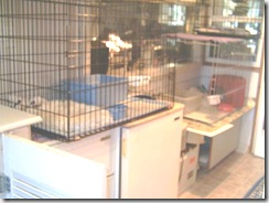 Cat-cages- 003 (Small)