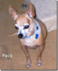 Paco-8Jun10