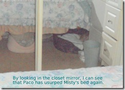 Paco-stole-Mistys-bed