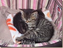 Nala&Milka1
