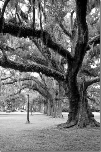 remanjon spanish-moss-live-oaks-audubon-park