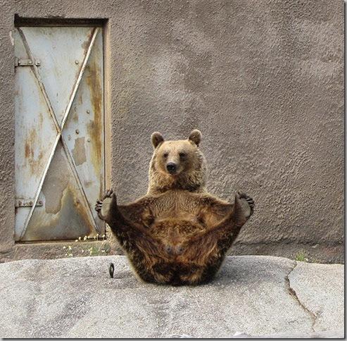 Yoga Bear 2