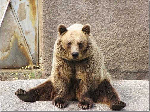 Yoga Bear 4