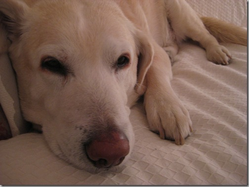 3-27 003