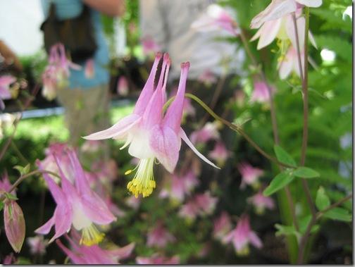 ladew garden days 010
