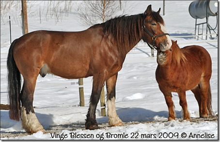 2010-22mars-blessen-bromle