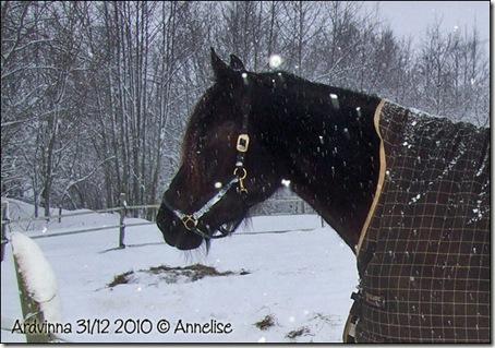 31-12-2010_08