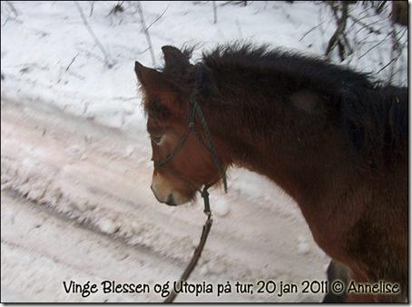 2011-20jan_03