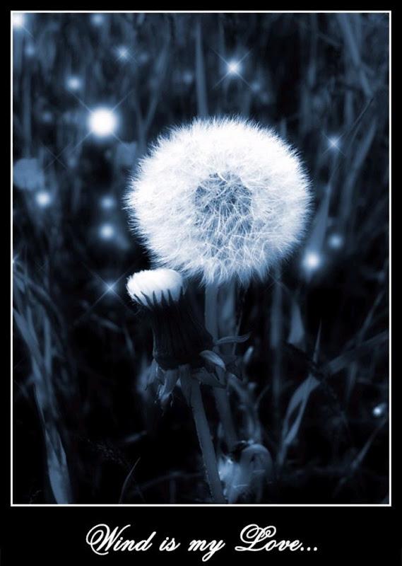 Beautiful Wish Flowers
