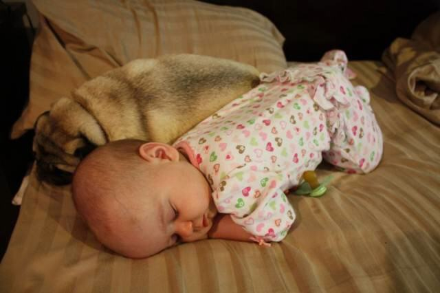 It couldn't get any cuter!!!