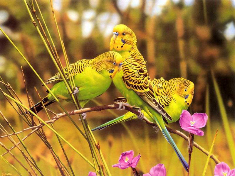Beautiful Birds!!!