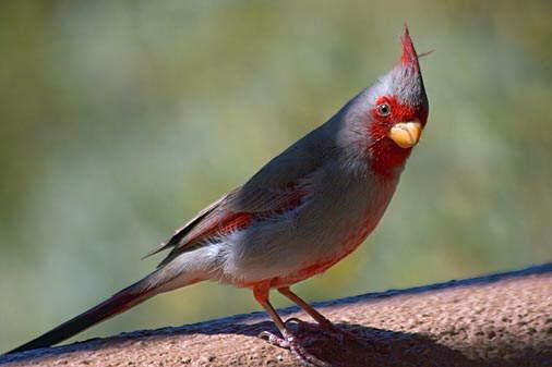 birds............