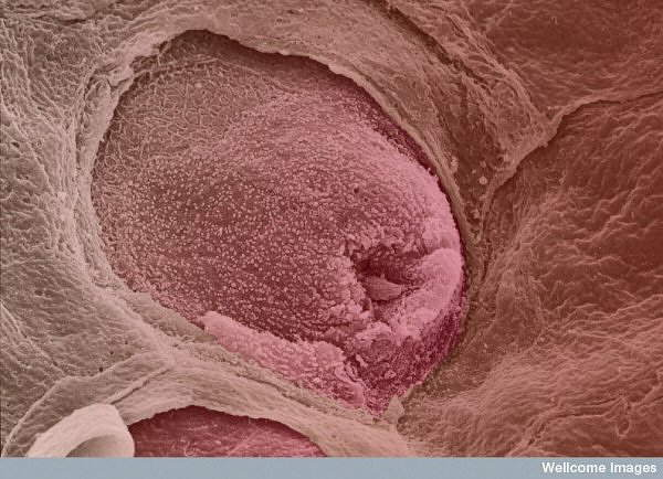 Beautiful Microscopic Images from Inside the Human Body